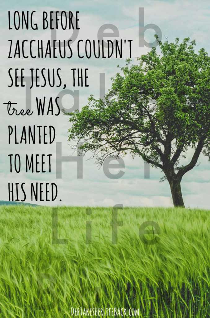 Long before Zacchaeus couldn't see Jesus, the tree was planted to meet his need.